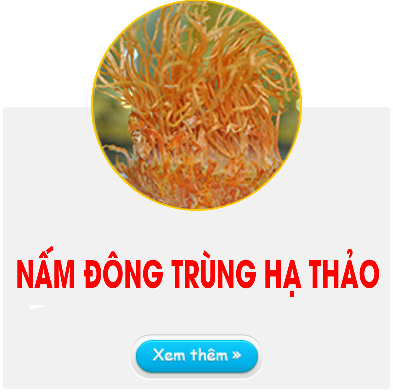 Nam Dong trung ha thao